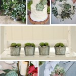 Hochzeitstrends 2013 – Teil 3: Sukkulenten