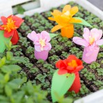 DIY-Anleitung: blütenbunte Save-the-Date-Überraschung