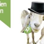 Spenden-Aktion im Advent – was Ziegenpärchen mit Hochzeiten zu tun haben