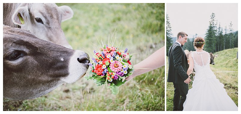 Hochzeitsfotos im Allgäu mit Kuh und Stier | Verrückt nach Hochzeit | Foto: http://nice4youreyes.de/
