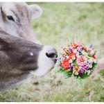 Desi & Andi – stierische Hochzeitsfotos im Allgäu